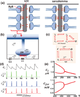Calcium Alternans is Due to an Order-Disorder Phase Transition in Cardiac Cells