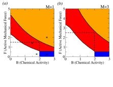 Oscillations and uniaxial mechanochemical waves in a model of an active poroelastic medium: Application to deformation patterns in protoplasmic droplets of Physarum polycephalum